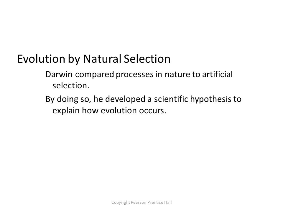 Copyright Pearson Prentice Hall Evolution by Natural Selection Darwin compared processes in nature to artificial selection.