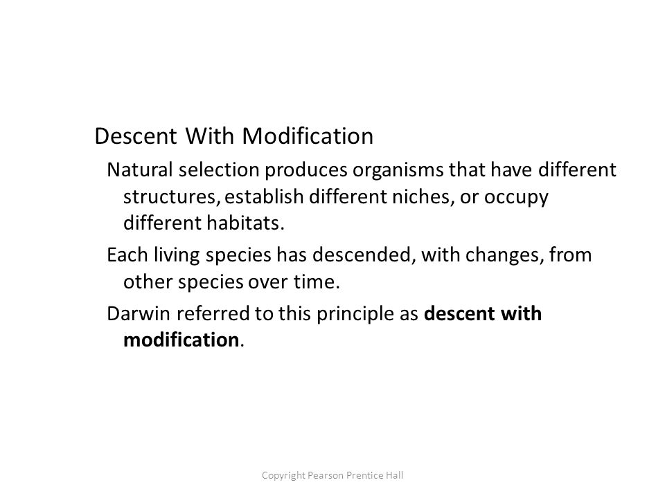 Copyright Pearson Prentice Hall Descent With Modification Natural selection produces organisms that have different structures, establish different niches, or occupy different habitats.