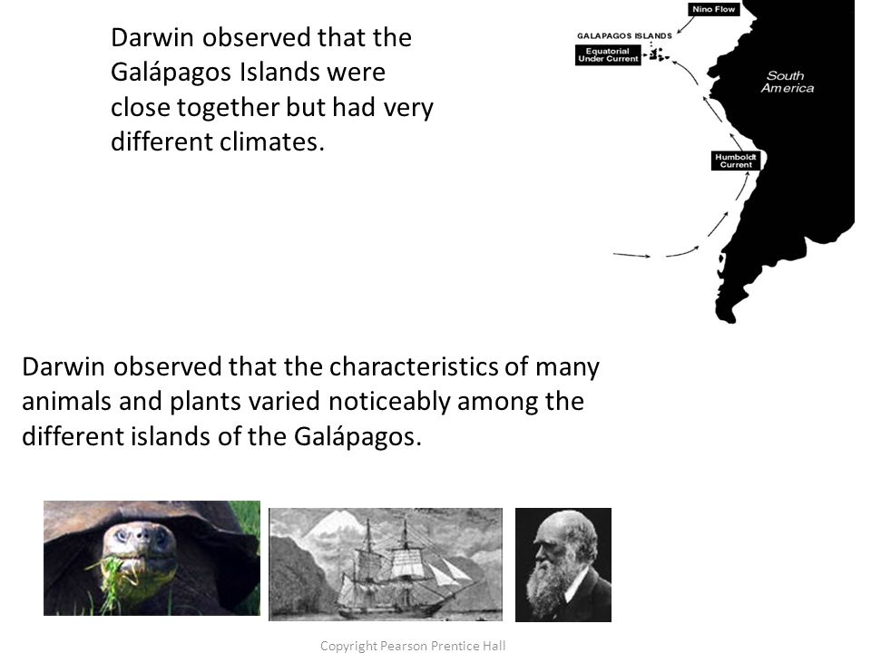 Copyright Pearson Prentice Hall Darwin observed that the characteristics of many animals and plants varied noticeably among the different islands of the Galápagos.