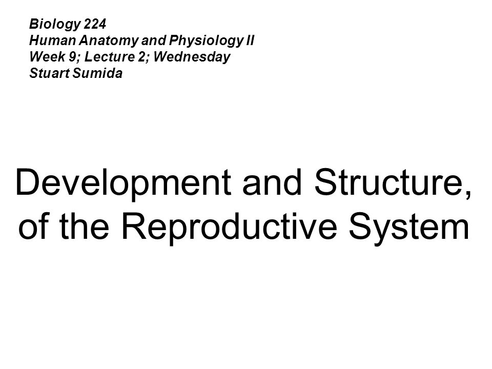Biology 224 Human Anatomy and Physiology II Week 9; Lecture 2 ...