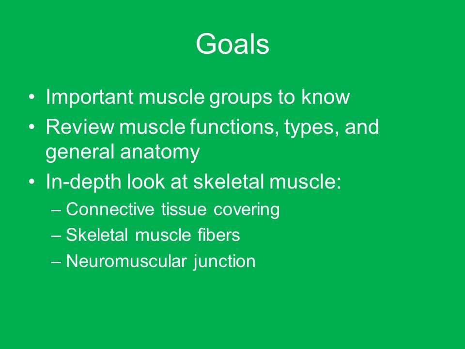 why are the connective tissue wrappings of skeletal muscles important