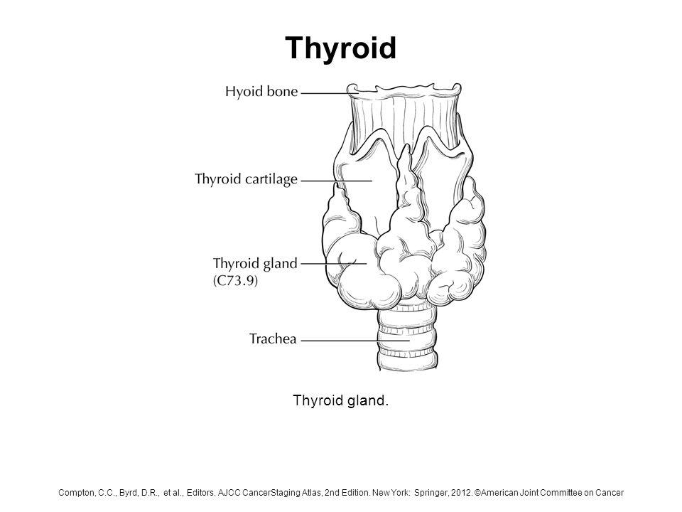 Thyroid Thyroid Gland Compton C C Byrd D R Et Al Editors