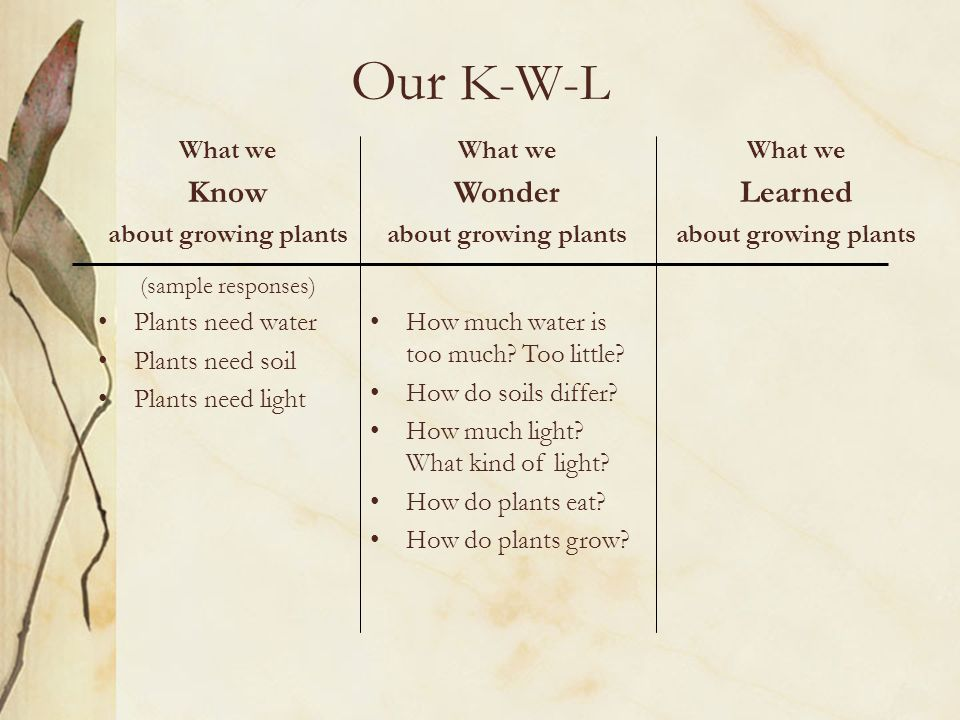 Our K W L What We Know About Growing Plants (sample Responses) Plants Need  Water Plants