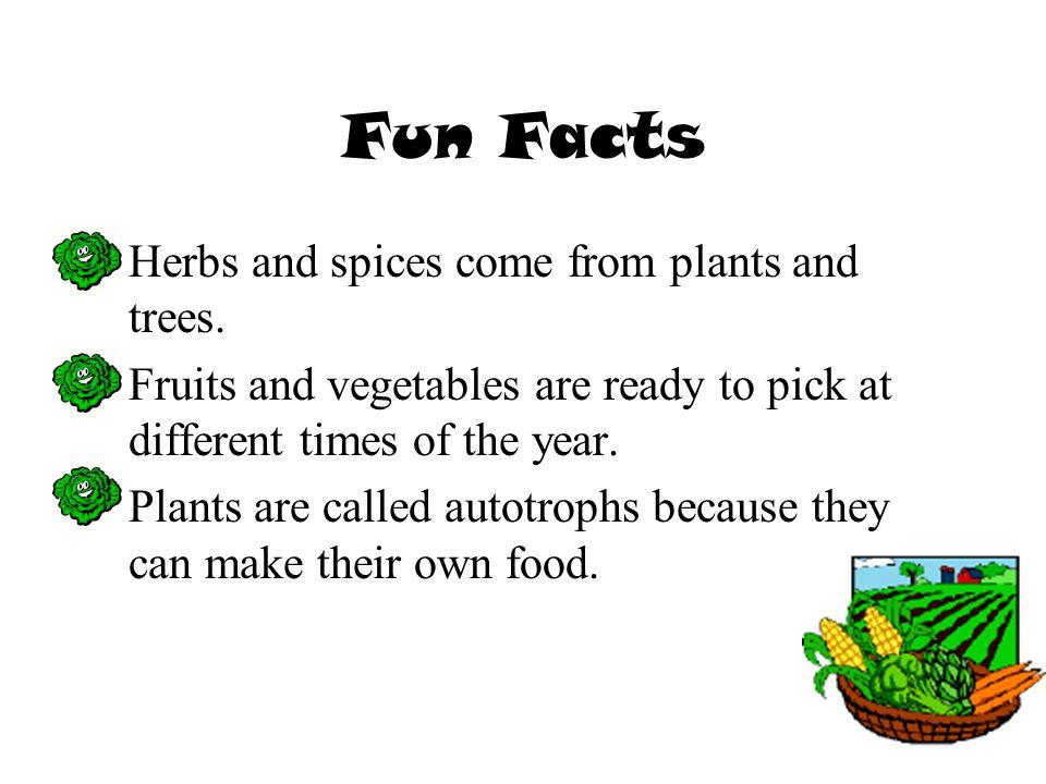 7 Fun Facts