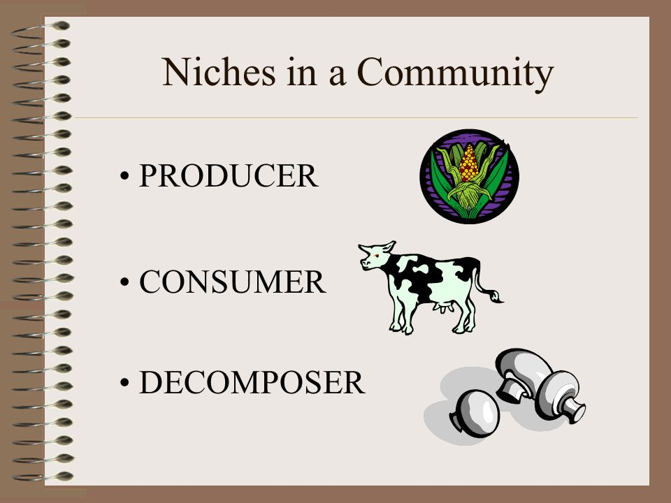 Niches in a Community PRODUCER CONSUMER DECOMPOSER