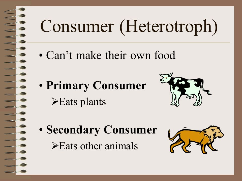 Consumer (Heterotroph) Can't make their own food Primary Consumer  Eats plants Secondary Consumer  Eats other animals
