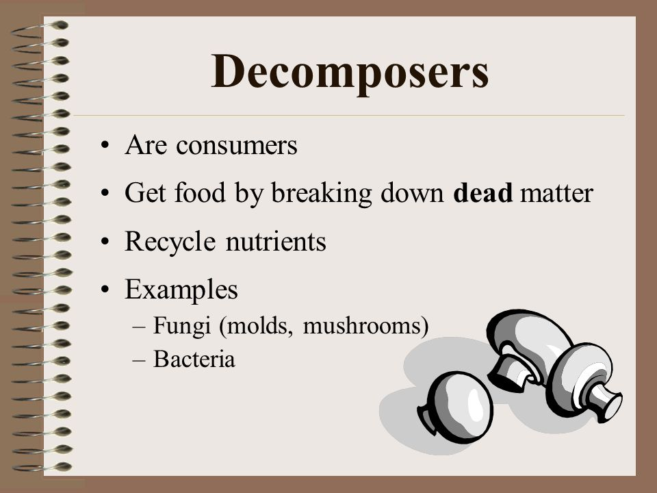 Decomposers Are consumers Get food by breaking down dead matter Recycle nutrients Examples –Fungi (molds, mushrooms) –Bacteria
