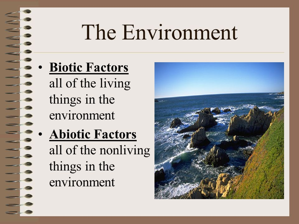 The Environment Biotic Factors all of the living things in the environment Abiotic Factors all of the nonliving things in the environment