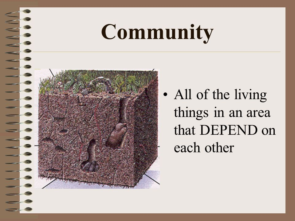 Community All of the living things in an area that DEPEND on each other
