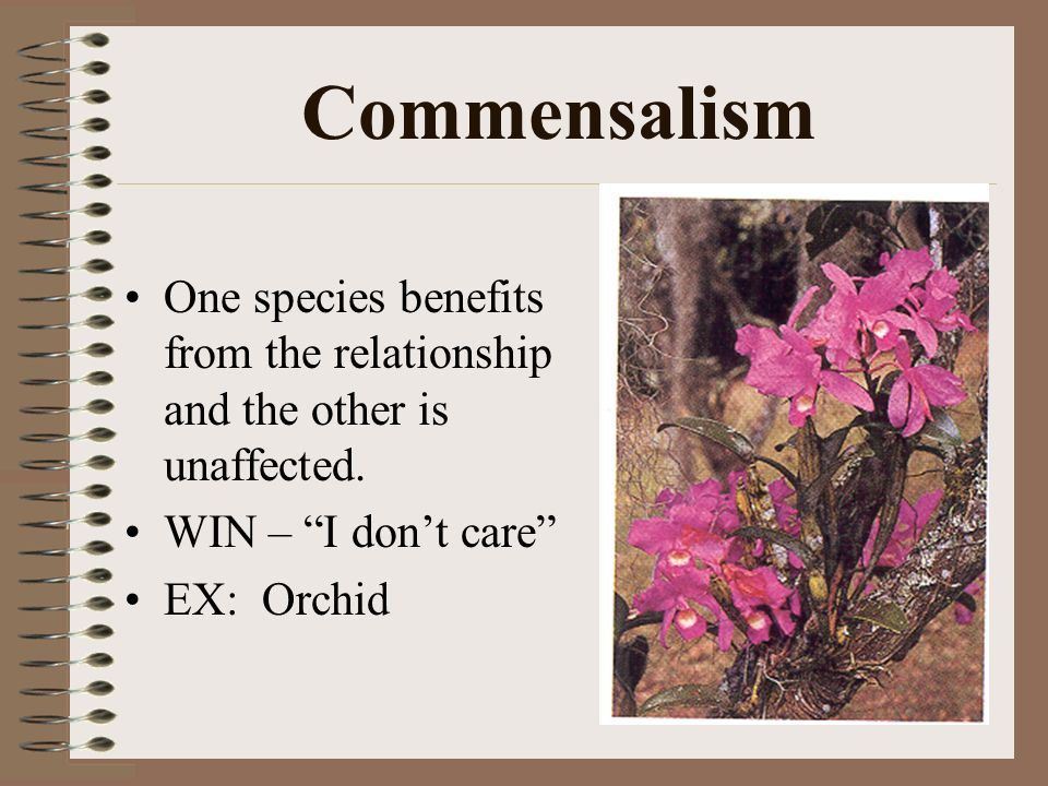 Commensalism One species benefits from the relationship and the other is unaffected.