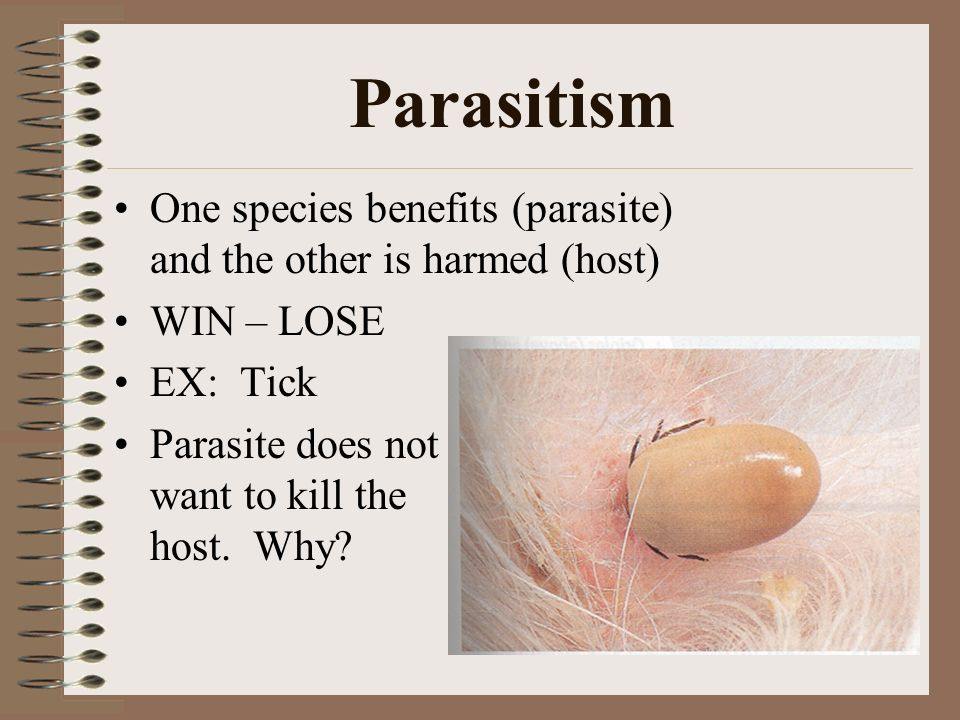 Parasitism One species benefits (parasite) and the other is harmed (host) WIN – LOSE EX: Tick Parasite does not want to kill the host.