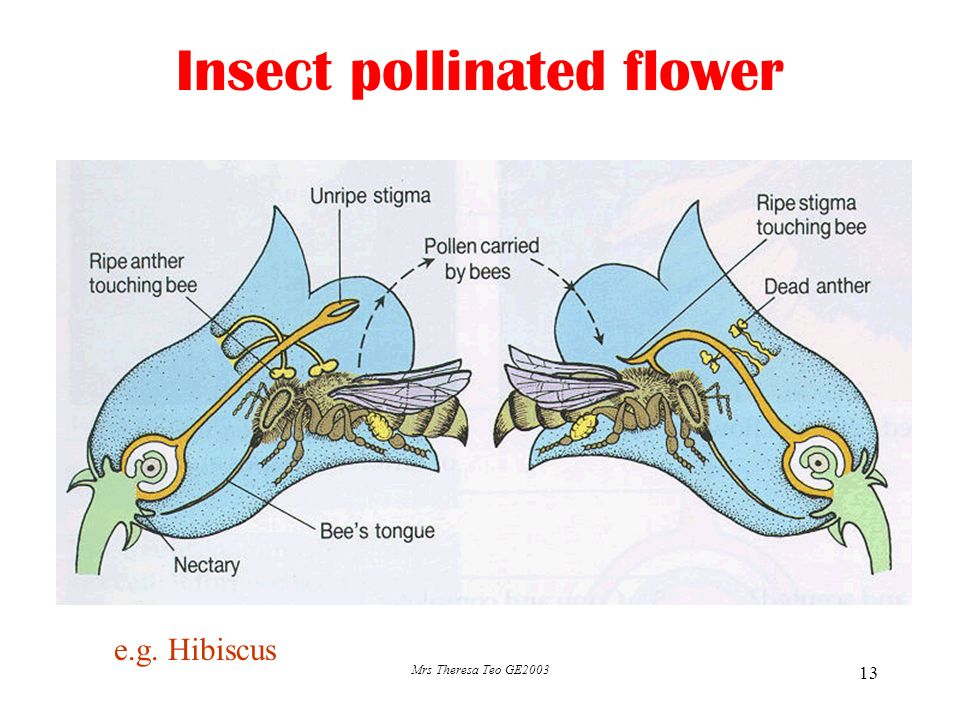 1 Sexual Reproduction In Plants Types Of Flowers Self Pollination Vs