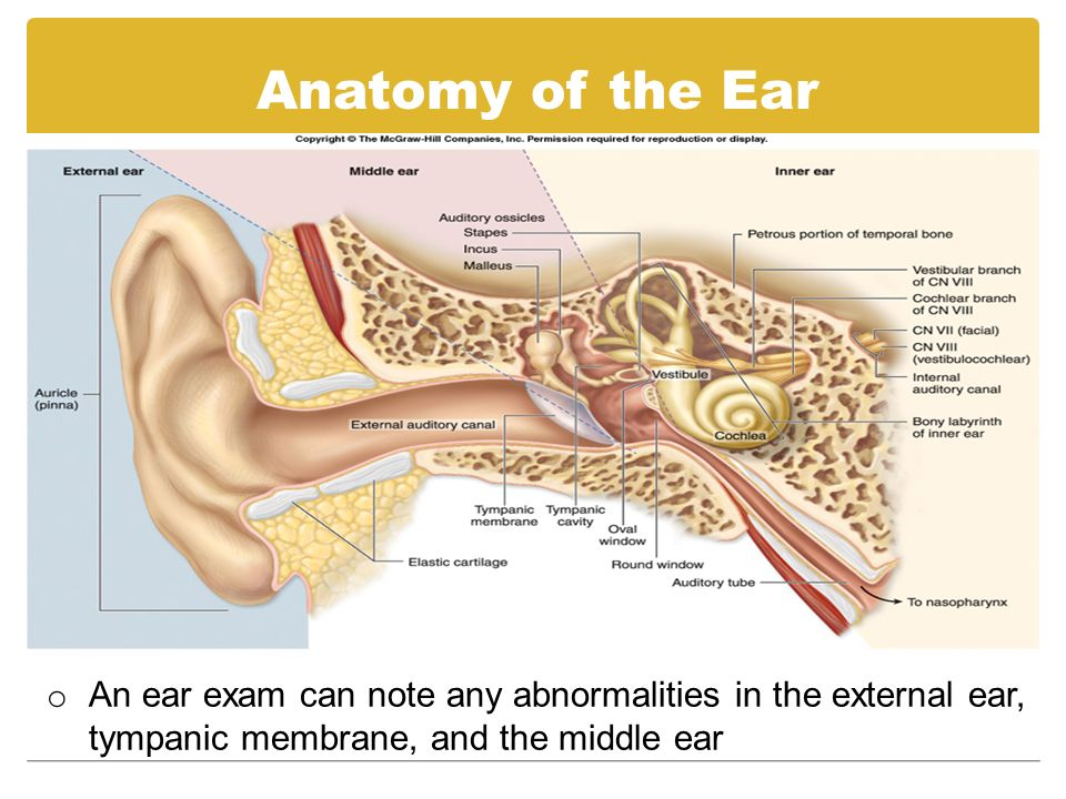 Step By Step Guide To Performing An Ear Exam Tool Otoscope Head