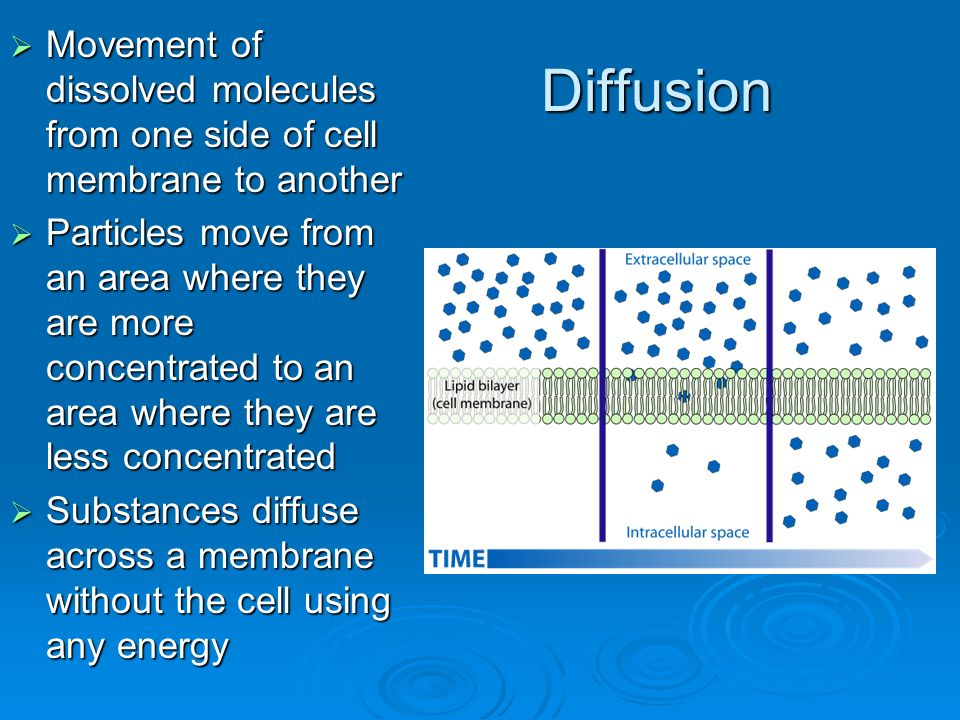 Diffusion  Movement of dissolved molecules from one side of cell membrane to another  Particles move from an area where they are more concentrated to an area where they are less concentrated  Substances diffuse across a membrane without the cell using any energy