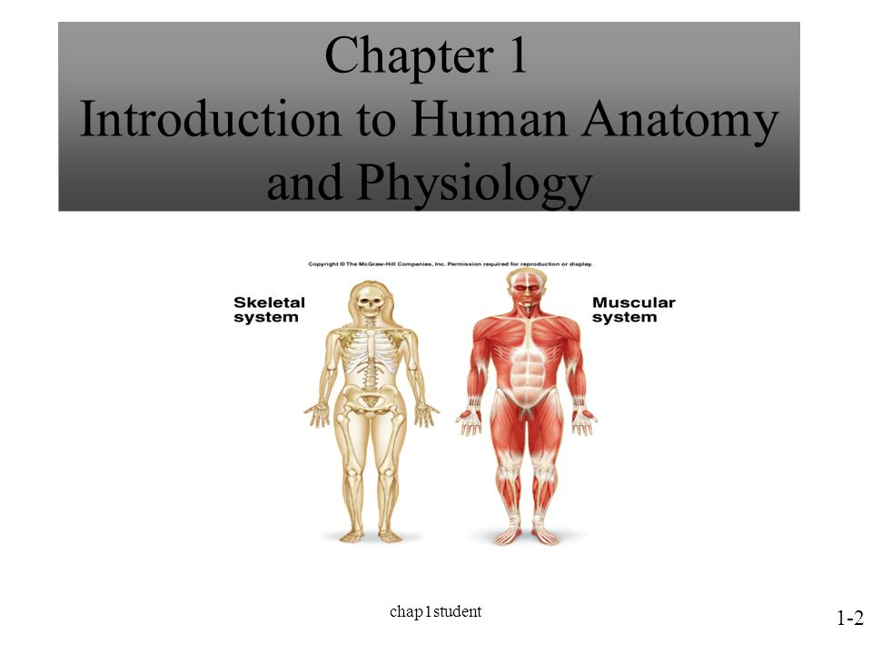 Chap1student Human Anatomy & Physiology I Chapter 1 Introduction to ...