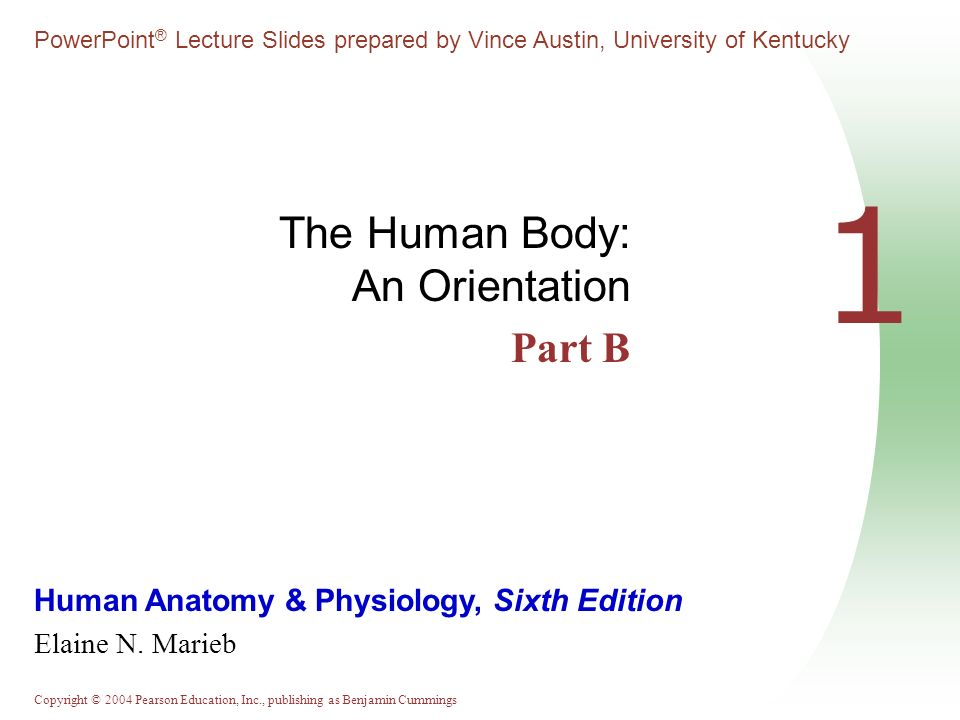 Copyright © 2004 Pearson Education, Inc., publishing as Benjamin Cummings Human Anatomy & Physiology, Sixth Edition Elaine N.