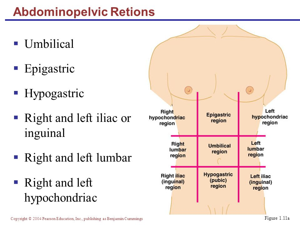 Copyright © 2004 Pearson Education, Inc., publishing as Benjamin Cummings Abdominopelvic Retions  Umbilical  Epigastric  Hypogastric  Right and left iliac or inguinal  Right and left lumbar  Right and left hypochondriac Figure 1.11a