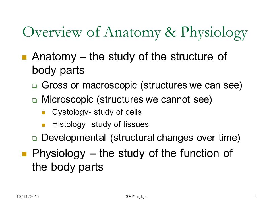 Overview of Anatomy & Physiology Anatomy – the study of the structure of body parts  Gross or macroscopic (structures we can see)  Microscopic (structures we cannot see) Cystology- study of cells Histology- study of tissues  Developmental (structural changes over time) Physiology – the study of the function of the body parts 10/11/2015 SAP1 a, b, c 4