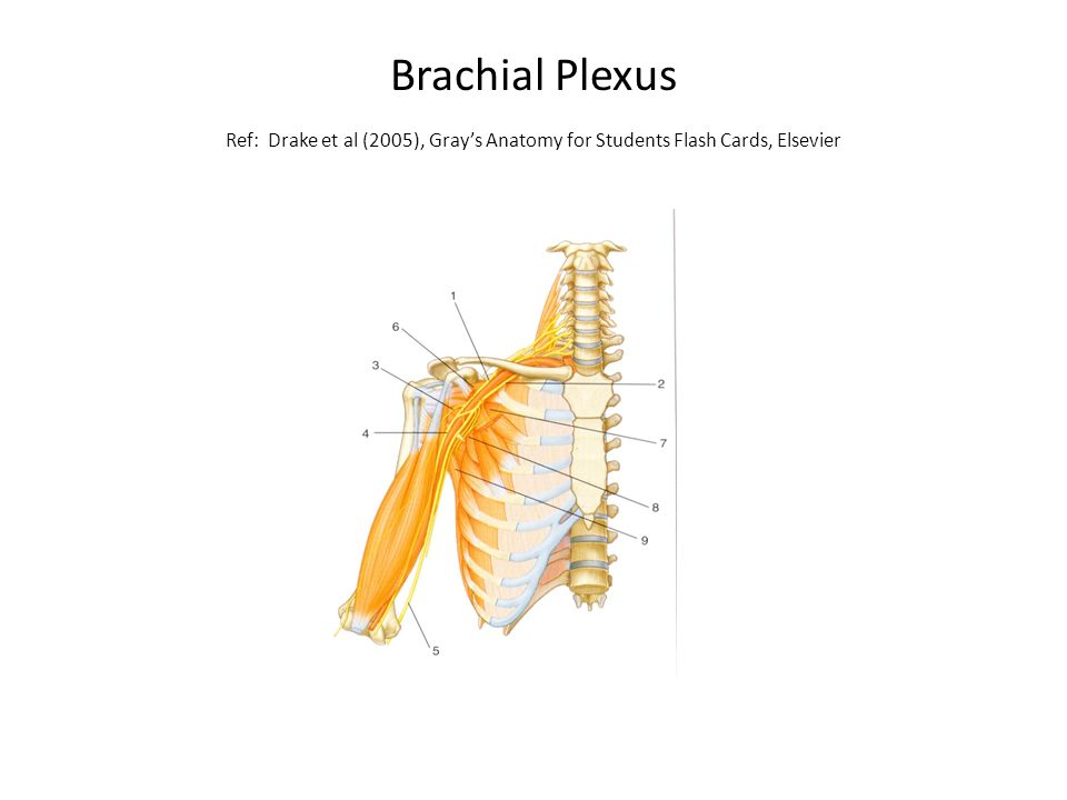 Peripheral Nerves: The Plexi. Learning Outcomes At the end of this ...