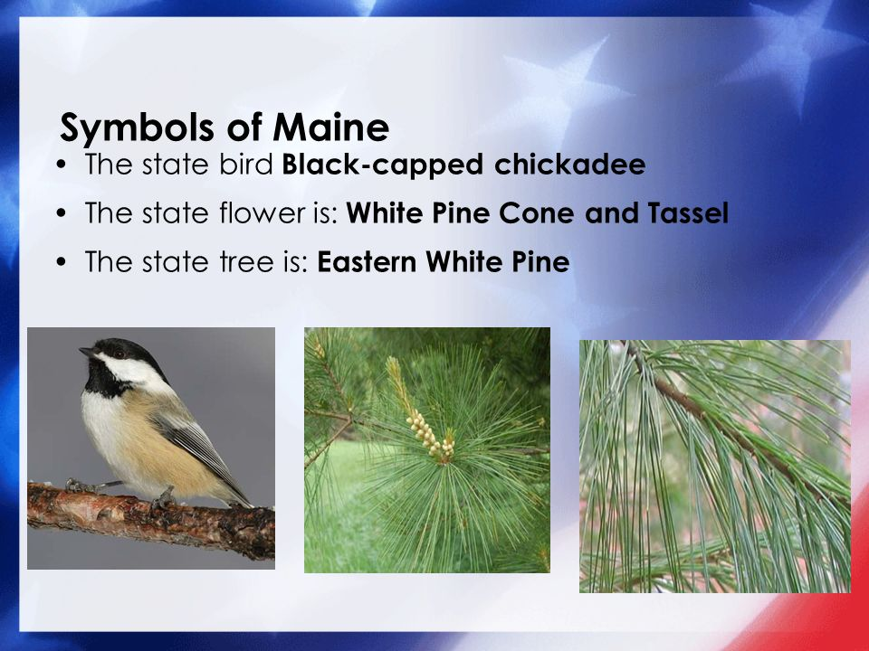 matthew 04 05 13 our 50 states maine symbols of maine the state