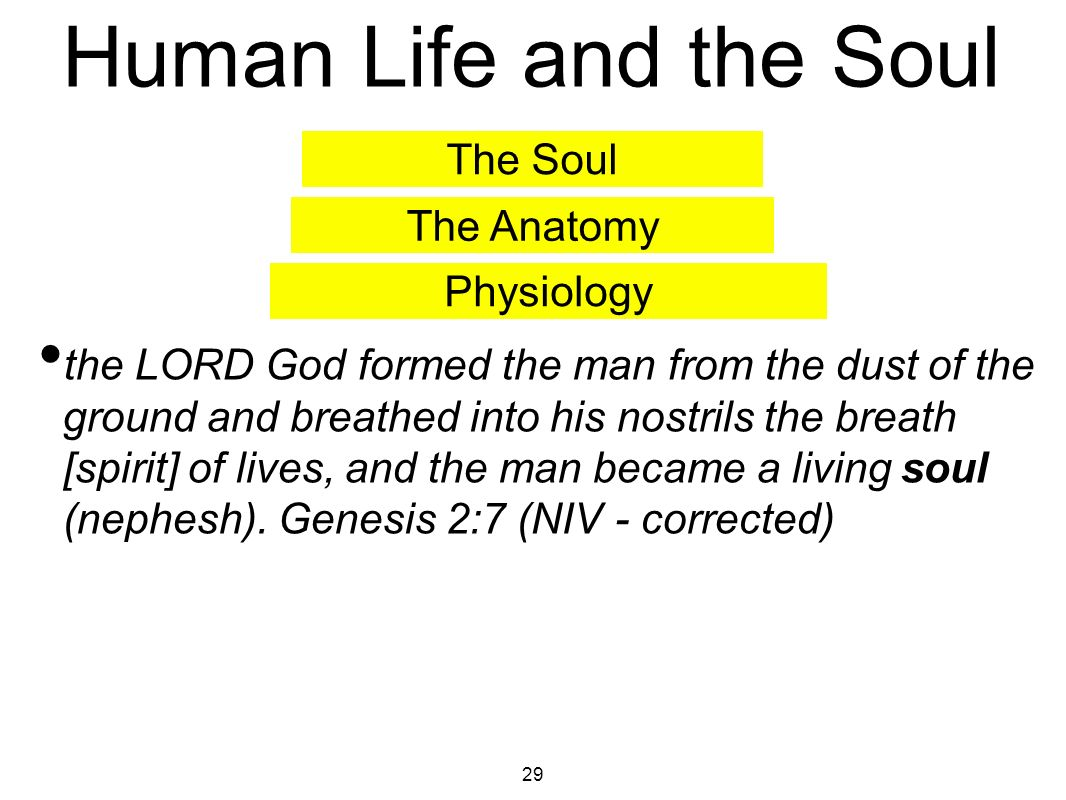SLB-015 ( ) Understanding the Soul and Spirit  - ppt download