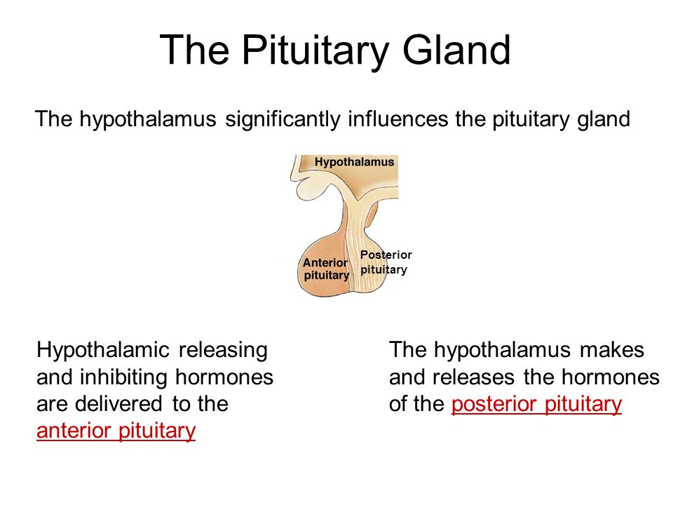 Disorders of the hypothalamus & pituitary gland | pathophysiology.