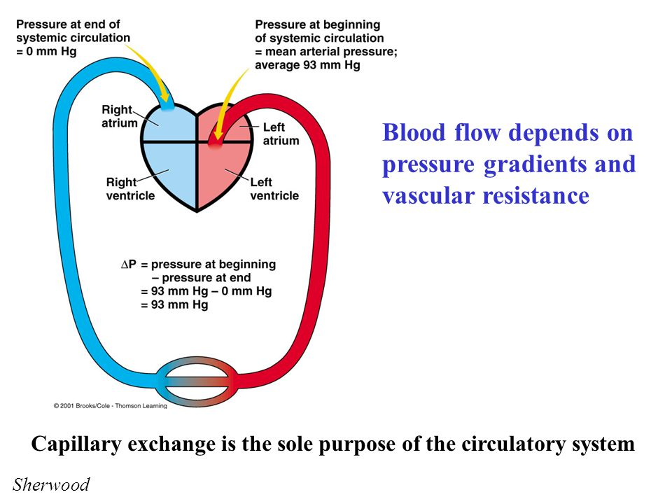 how can blood pressure and flow be regulated locally