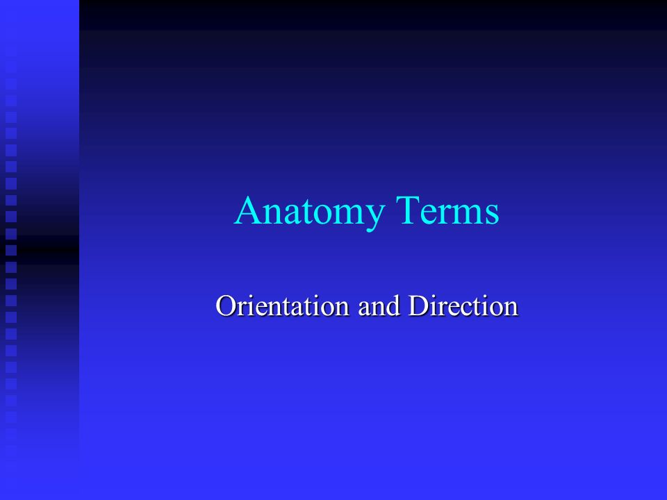 Anatomy Terms Orientation And Direction Superior Towards Head