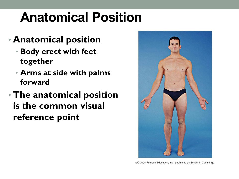 Anatomical Positions Anatomical Position Anatomical Position Body
