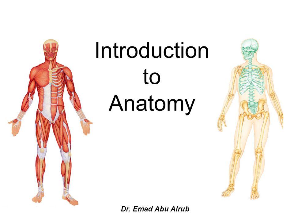 Introduction To Anatomy A Dr Emad Abu Alrub Overview Of Anatomy