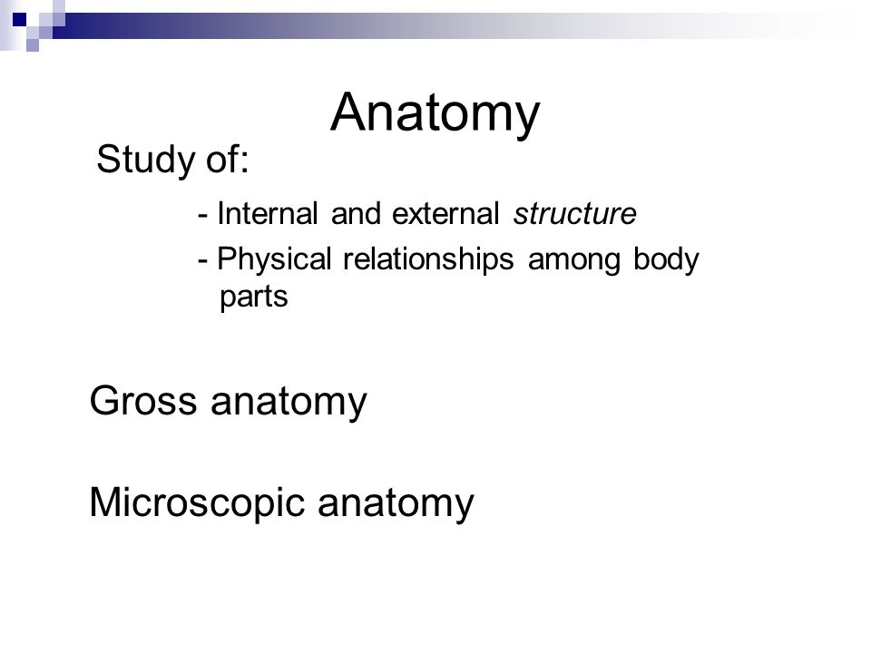 Introduction to Anatomy Chapter 1. Anatomy - Internal and external ...