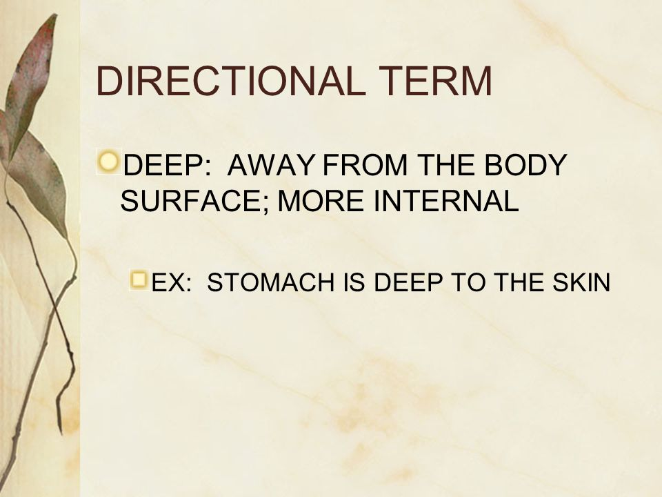 DIRECTIONAL TERM DEEP: AWAY FROM THE BODY SURFACE; MORE INTERNAL EX: STOMACH IS DEEP TO THE SKIN