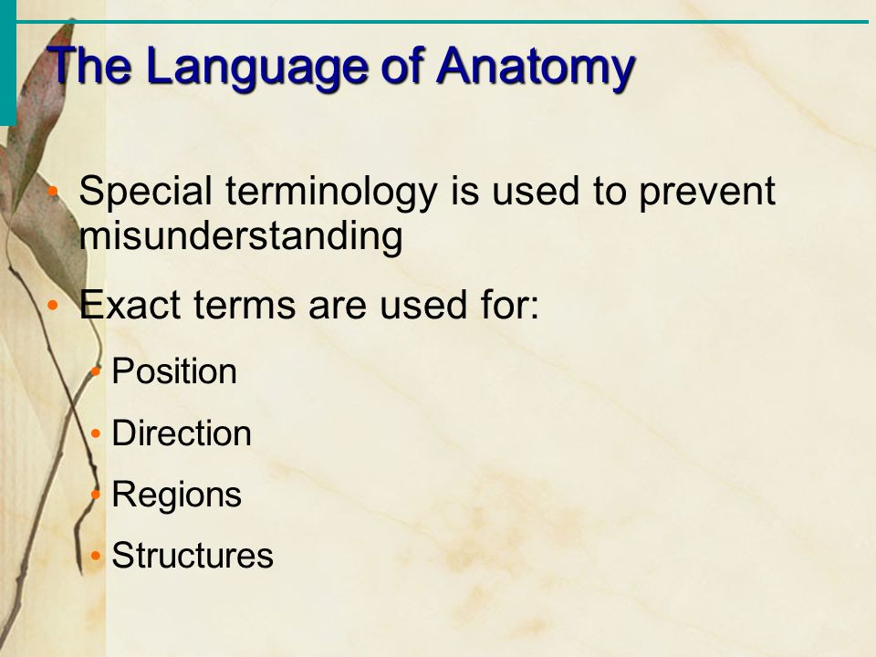 The Language of Anatomy Special terminology is used to prevent misunderstanding Exact terms are used for: Position Direction Regions Structures