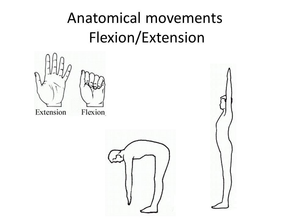"""Introduction Anatomy Azami PHD. Definition Anatomy- From Greek """"to ..."""