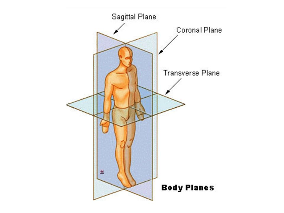 Body Directions And Planes Anatomical Directions Anatomical