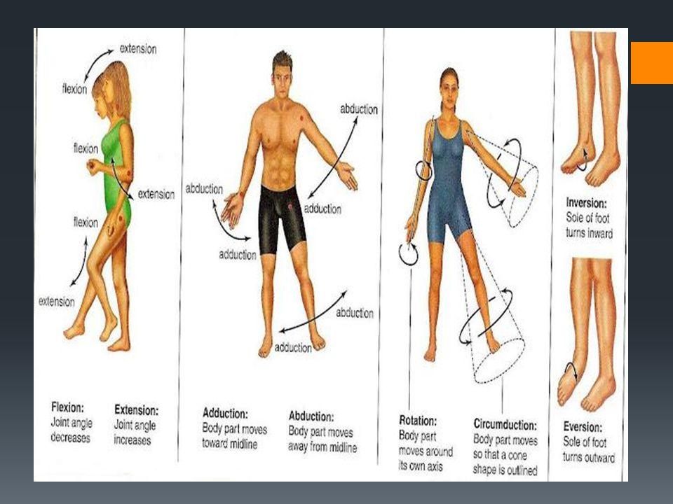 Human Body Orientation - ppt video online download