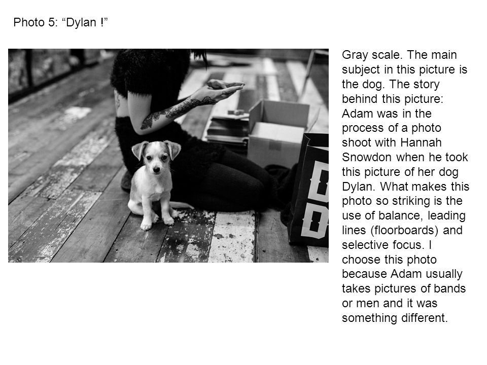 Photo 5: Dylan ! Gray scale. The main subject in this picture is the dog.