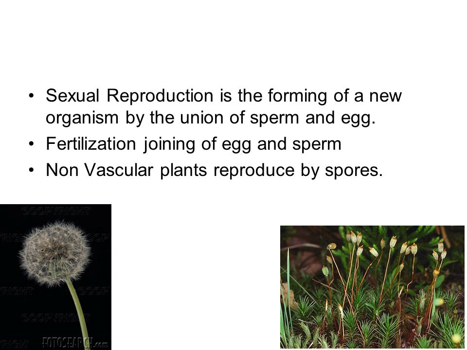 Sexual Reproduction is the forming of a new organism by the union of sperm and egg.