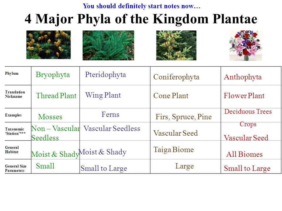 KINGDOM PLANTAE PHYLUM EPUB