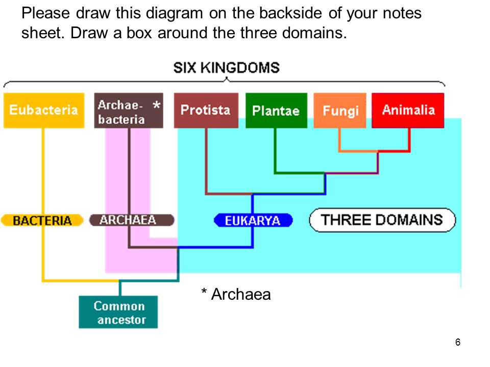 6 * * Archaea Please draw this diagram on the backside of your notes sheet.