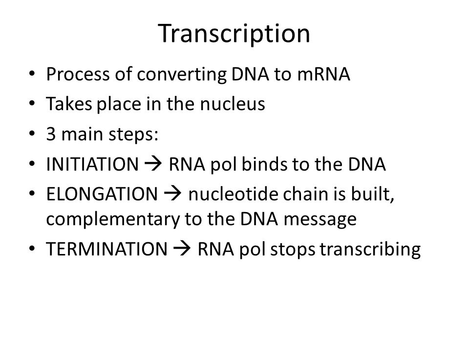 Transcription Process of converting DNA to mRNA Takes place in the nucleus 3 main steps: INITIATION  RNA pol binds to the DNA ELONGATION  nucleotide chain is built, complementary to the DNA message TERMINATION  RNA pol stops transcribing