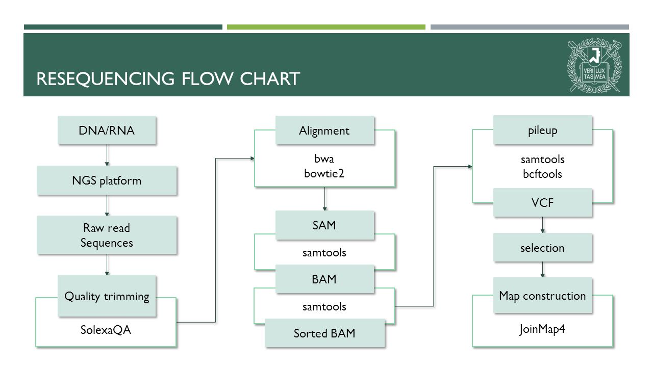 RESEQUENCING FLOW CHART SolexaQA bwa bowtie2 bwa bowtie2 Alignment samtools SAM samtools BAM Sorted BAM samtools bcftools samtools bcftools pileup VCF selection JoinMap4 Map construction DNA/RNA NGS platform Raw read Sequences Raw read Sequences Quality trimming