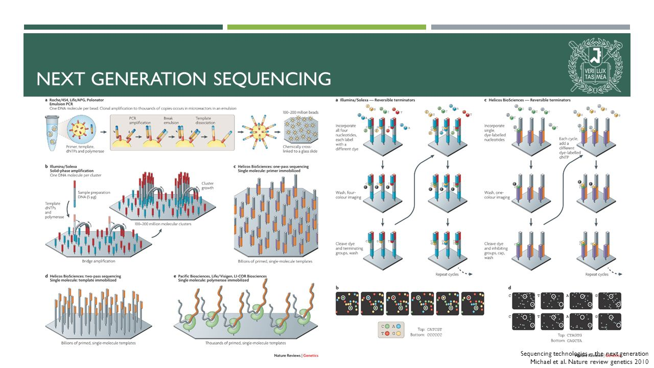 NEXT GENERATION SEQUENCING Sequencing technologies – the next generation Michael et al.