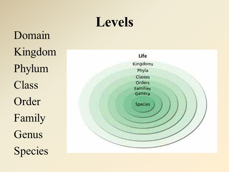 Levels Domain Kingdom Phylum Class Order Family Genus Species