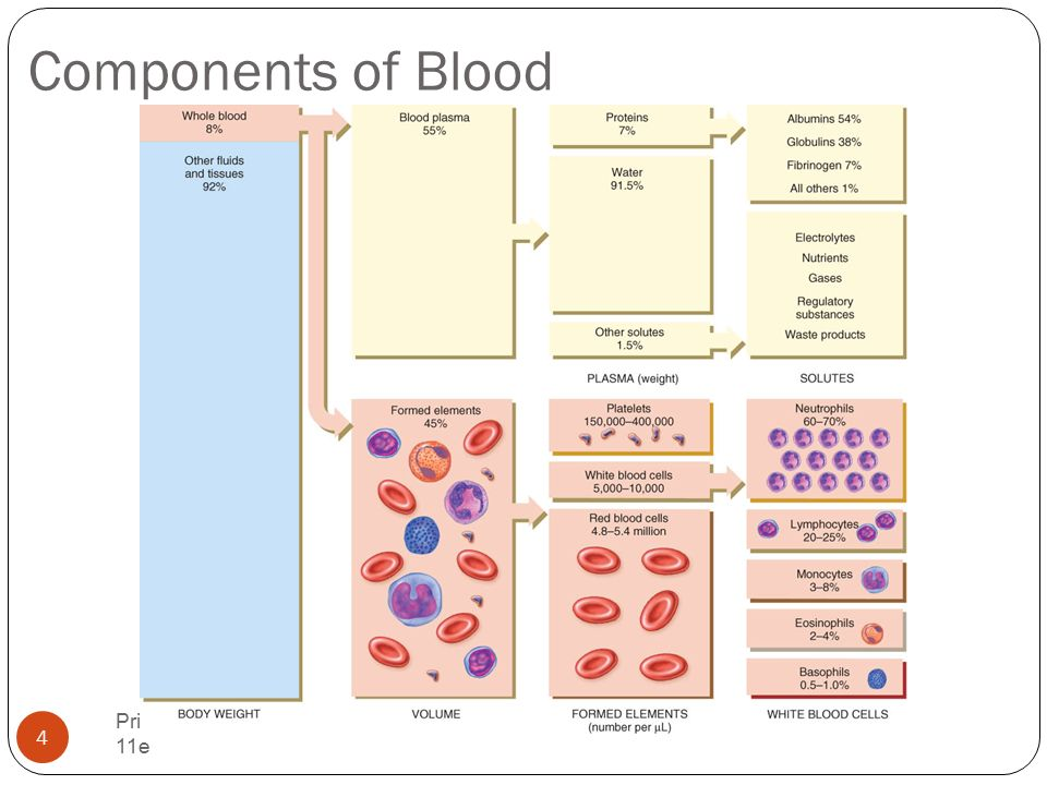Chapter 19 The Cardiovascular System: The Blood Principles of Human ...