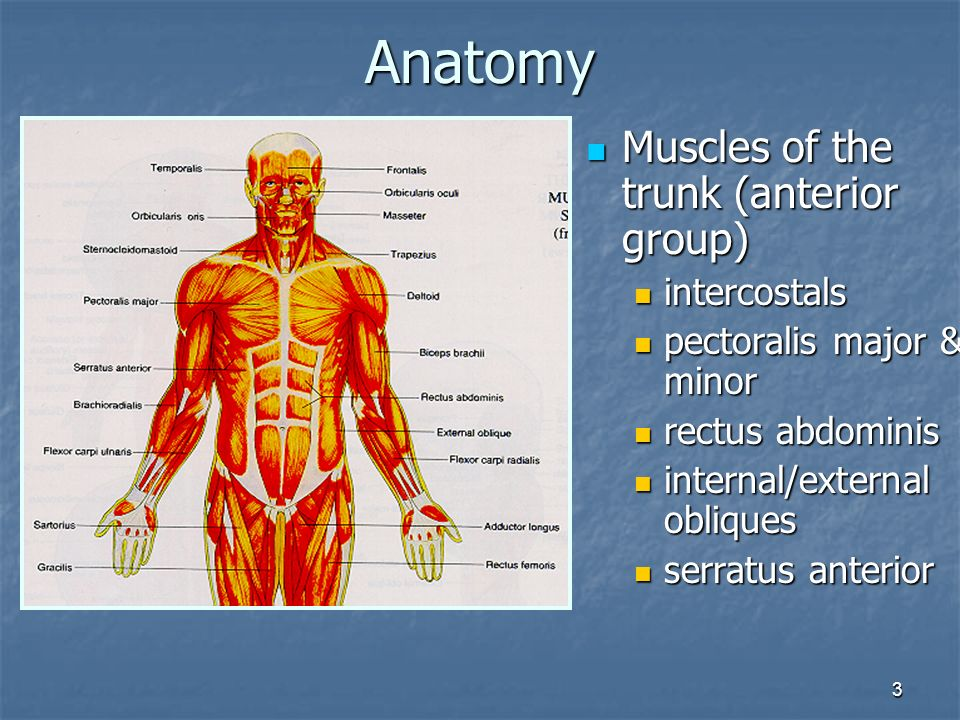 1 Injuries to the Thorax and Abdomen 2 Anatomy Thoracic cage ...