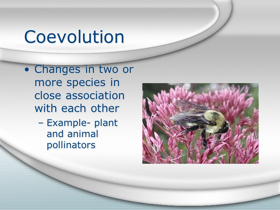 Coevolution Changes in two or more species in close association with each other –Example- plant and animal pollinators Changes in two or more species in close association with each other –Example- plant and animal pollinators