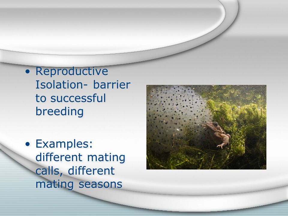 Reproductive Isolation- barrier to successful breeding Examples: different mating calls, different mating seasons Reproductive Isolation- barrier to successful breeding Examples: different mating calls, different mating seasons