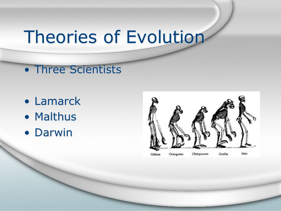 Theories of Evolution Three Scientists Lamarck Malthus Darwin Three Scientists Lamarck Malthus Darwin