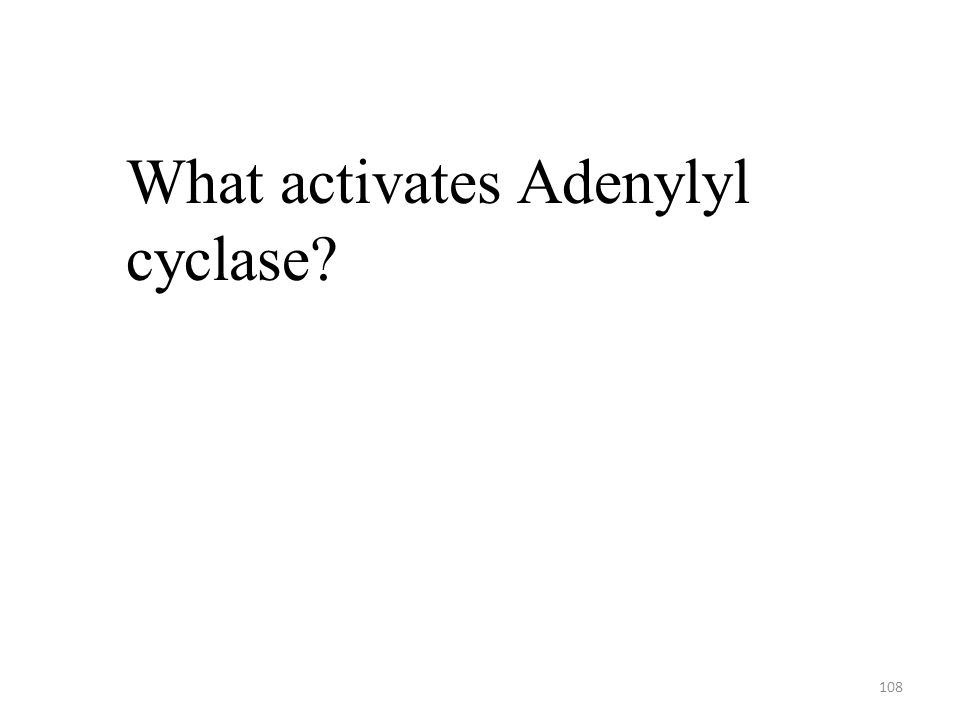 108 What activates Adenylyl cyclase